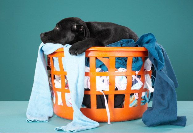 17 Signs You Re The Responsible One Pet Gear Pet Hair Love Your Pet