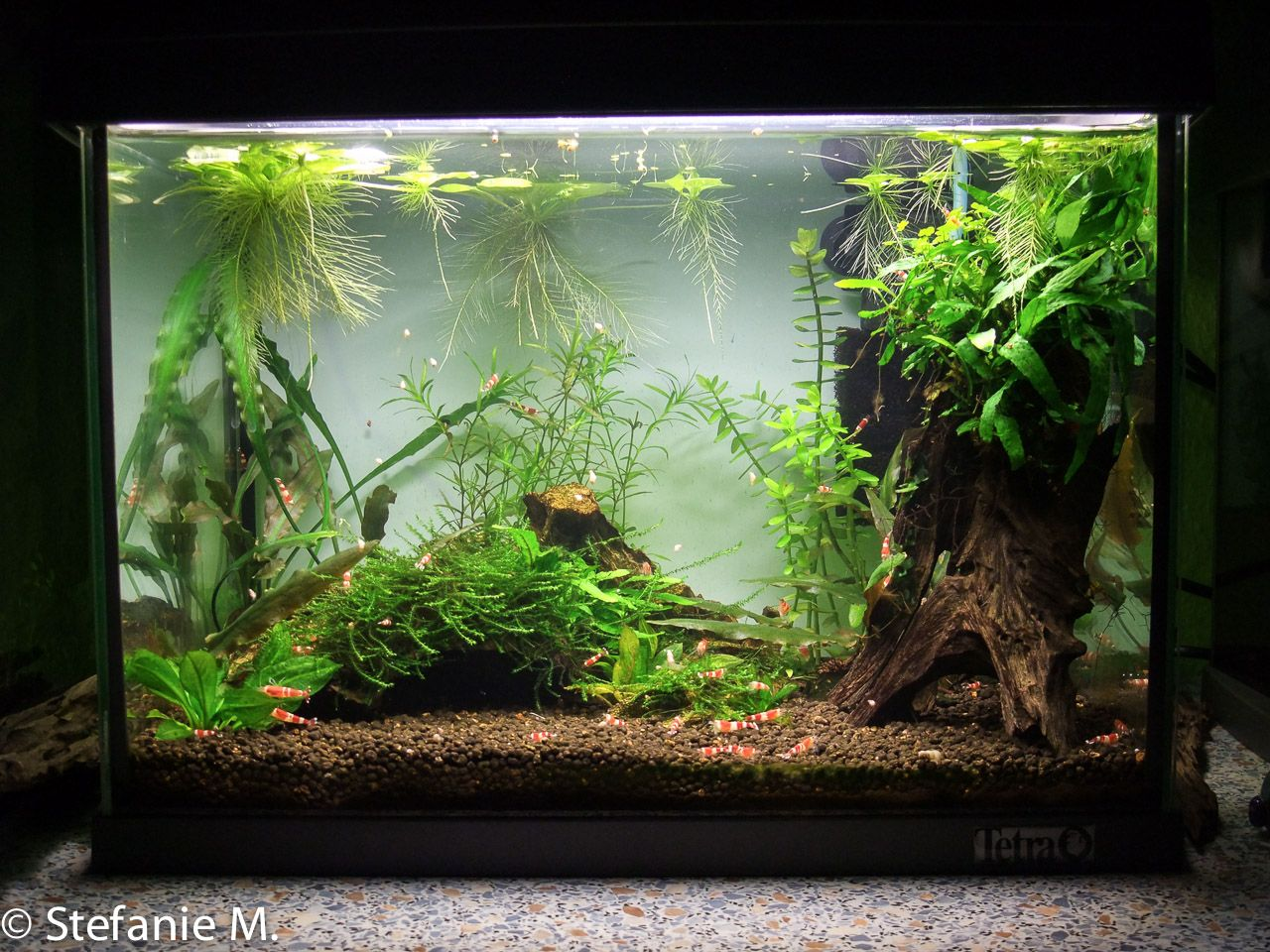 click the image to open in full size fish tanks plants kleines aquarium aquarium und
