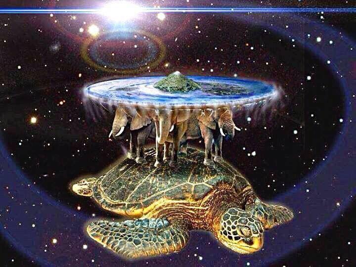Pin By Carl Kline On Turtles Etc