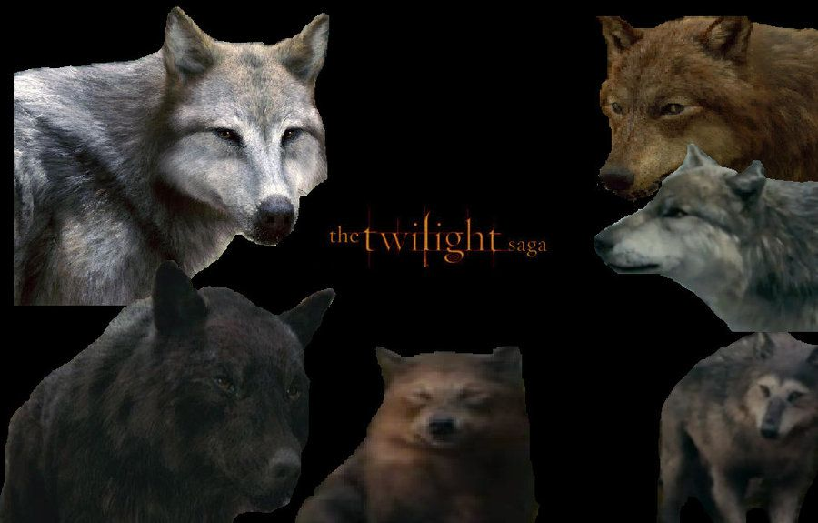 Twilight Saga Wolves By Alphawolfkodijrdeviantartcom On