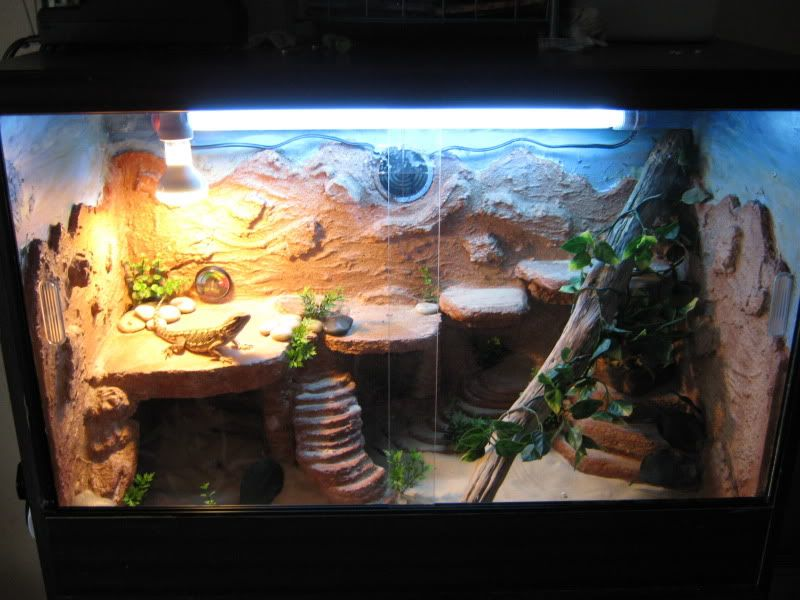 Page 7 - Reptile Forums - Http://coolexoticpets.com/wp-content/uploads/2012/07/Lizard