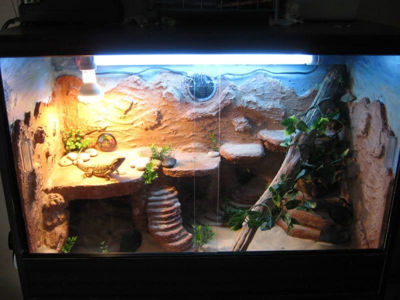 Pin By Sammie Black On Lovely Lizard Terrarium Bearded Dragon