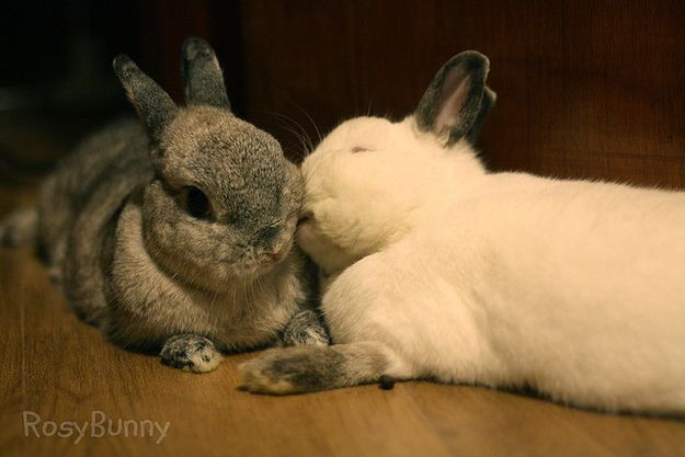 Download Give Each Other Kisses Cute Bunny Cutest Bunny Ever Baby Bunnies