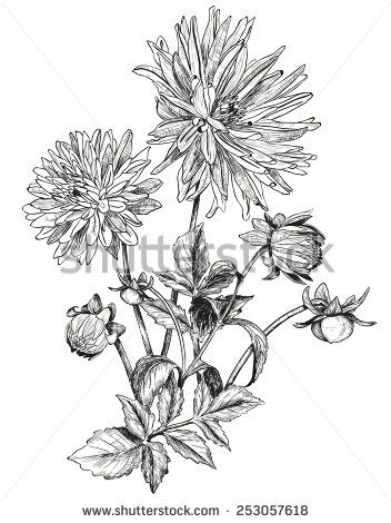 Black And White Drawing Aster Flower Google Search Flower Line Drawings Aster Tattoo Aster Flower Tattoos