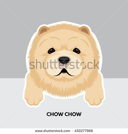 Vector Illustration Portrait of Chow chow Puppy  Dog
