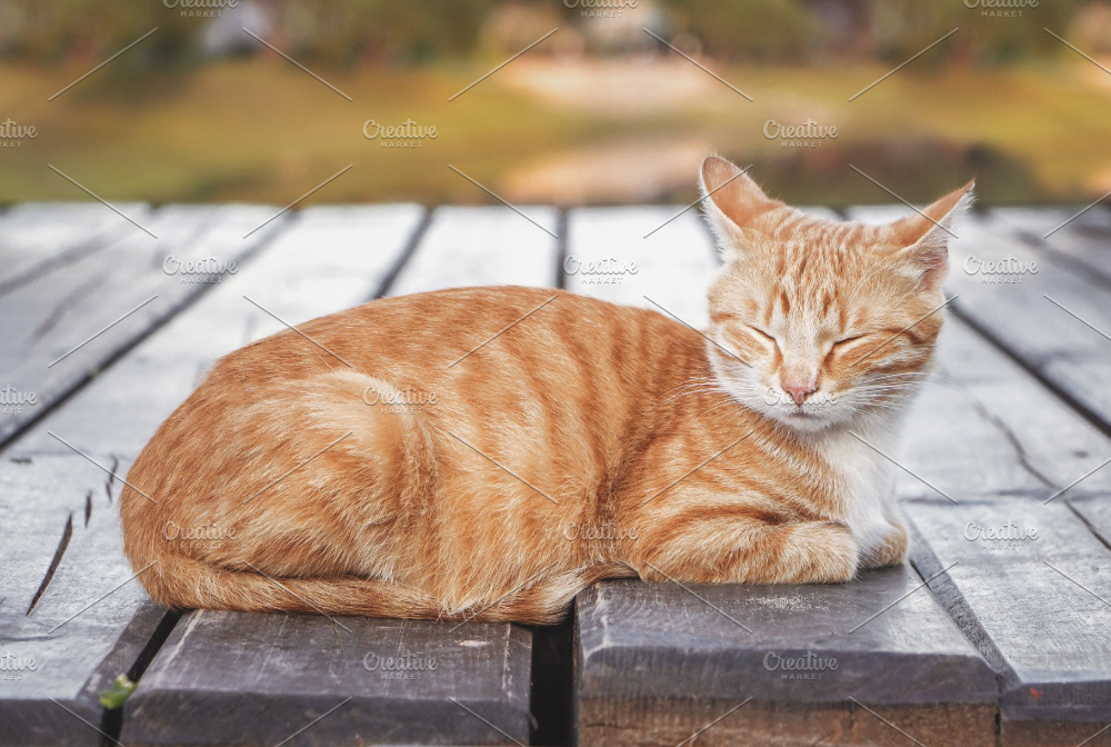 ginger tabby cat Google Search in 2020 Tabby cat, Cat