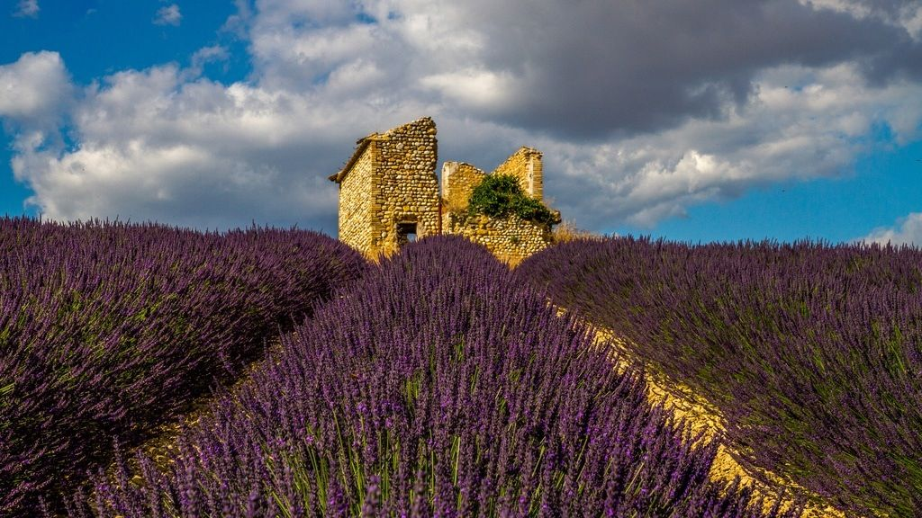 Lavender fields Provence | Share