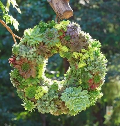 How to Get a Gorgeous {Two-Step Succulent Wreath}