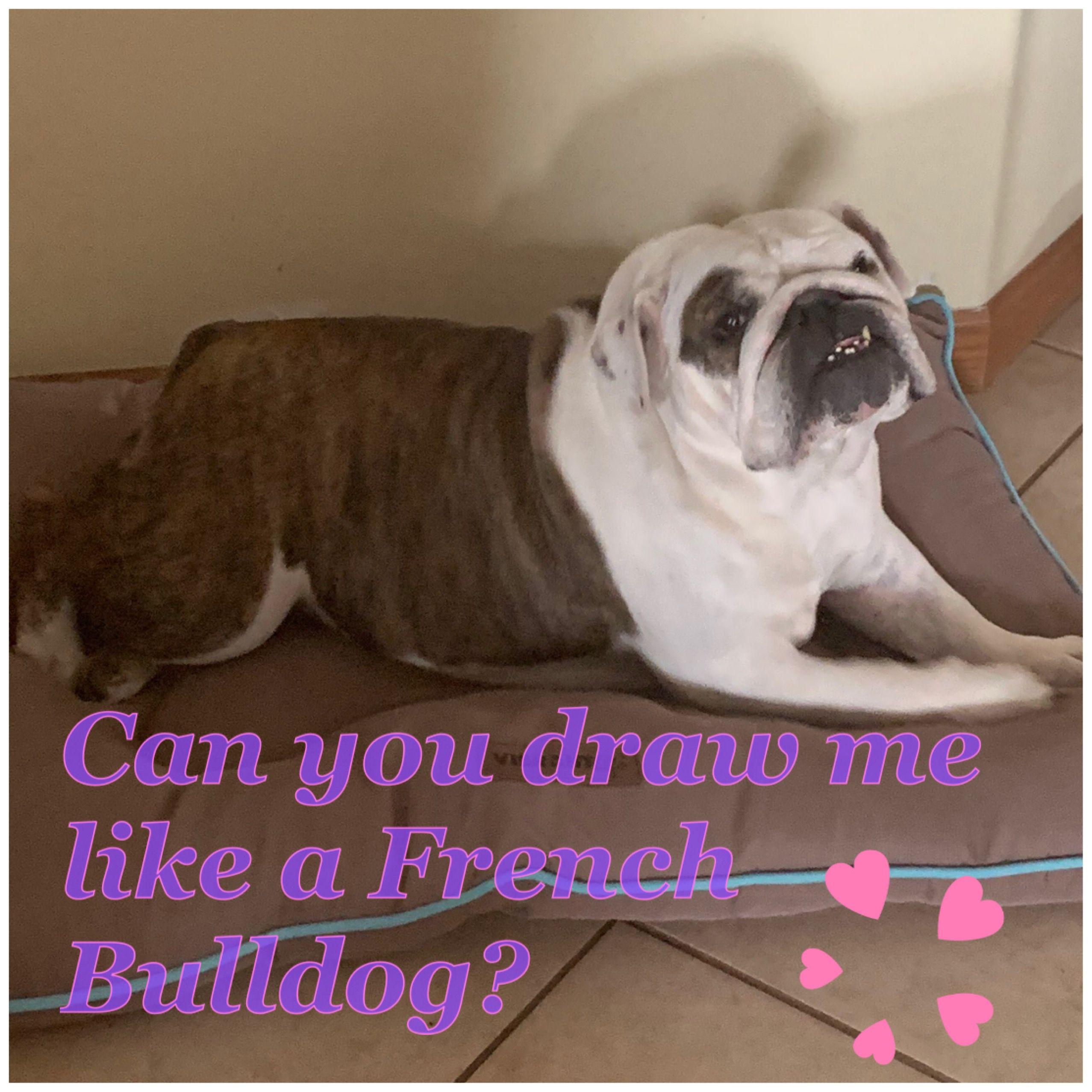 Disney Playing Around French Bulldog Puppies