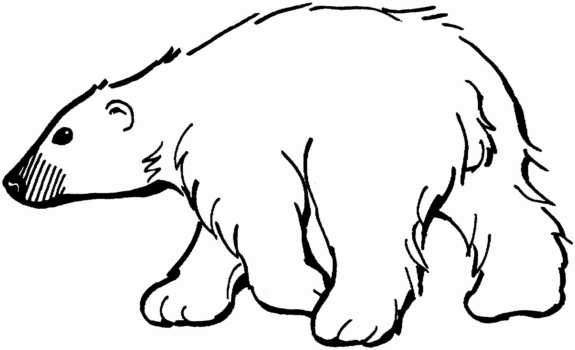 Polar Bear Coloring Page New Free Bear Coloring Pages Kleurplaten Ijsbeer Silhouet