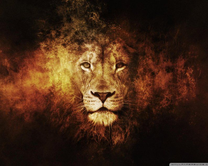 Extra Large Lion Photo Canvas Print Wildlife Animal Dark Background Framed Wall Art Hand Made In Europe For Home And Office In 2021 Lion Hd Wallpaper Lion Artwork Lion Pictures Fire lion wallpaper hd download