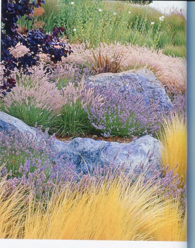 Photo of boulders and natural grasses #meadowgarden #meadow #garden #illustration
