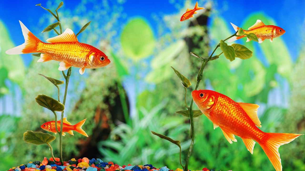 Freshwater aquarium fish help - Learn What Are The Best Fish Tanks For Beginners With The Help Of Aquarium Expert Joseph