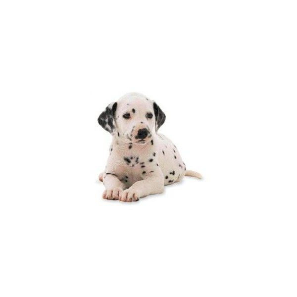 Love Dalmations Dogs Dogs Puppies Dalmatian Dogs