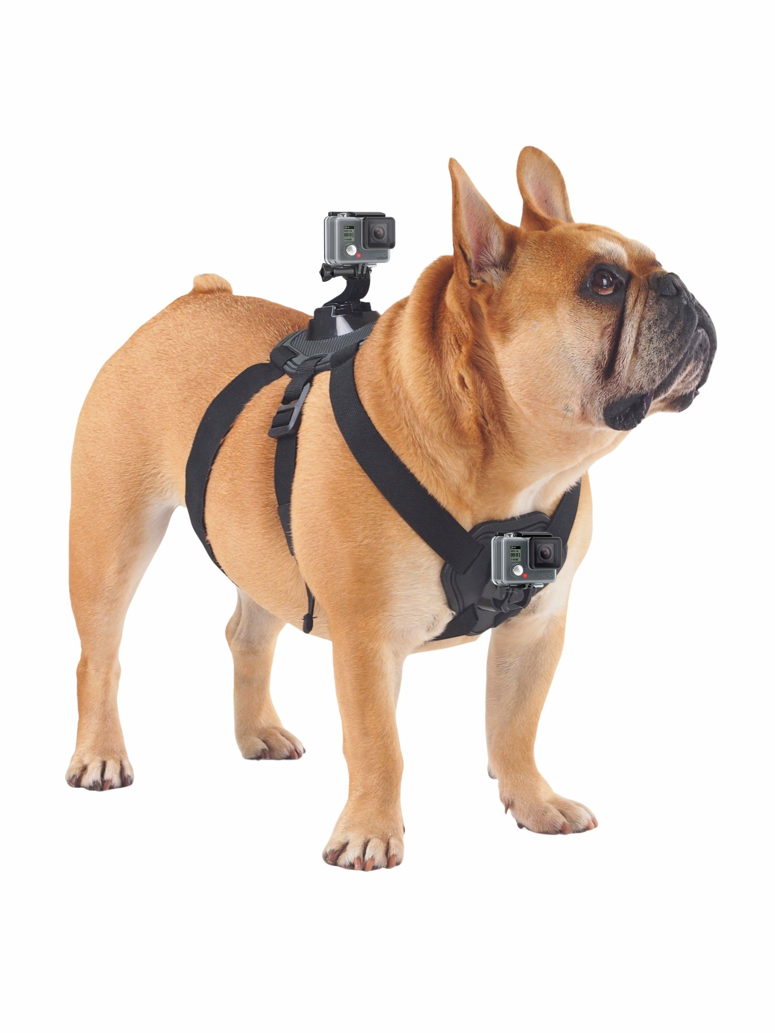 Shoot Action Dog Harness Dog Harness Dogs Dog Weight