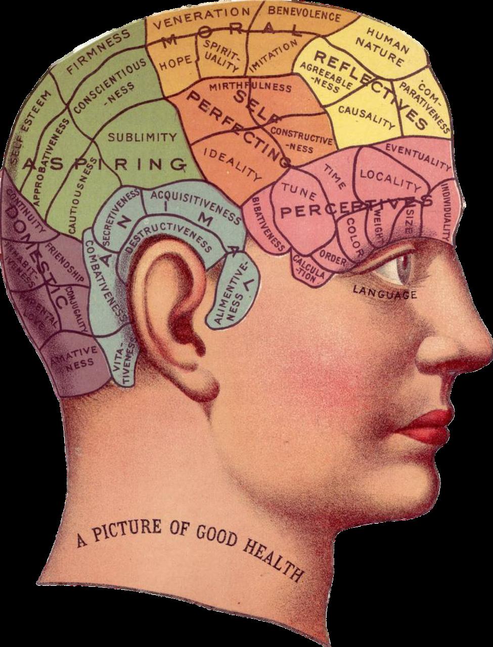 Pin on Brain Fitness