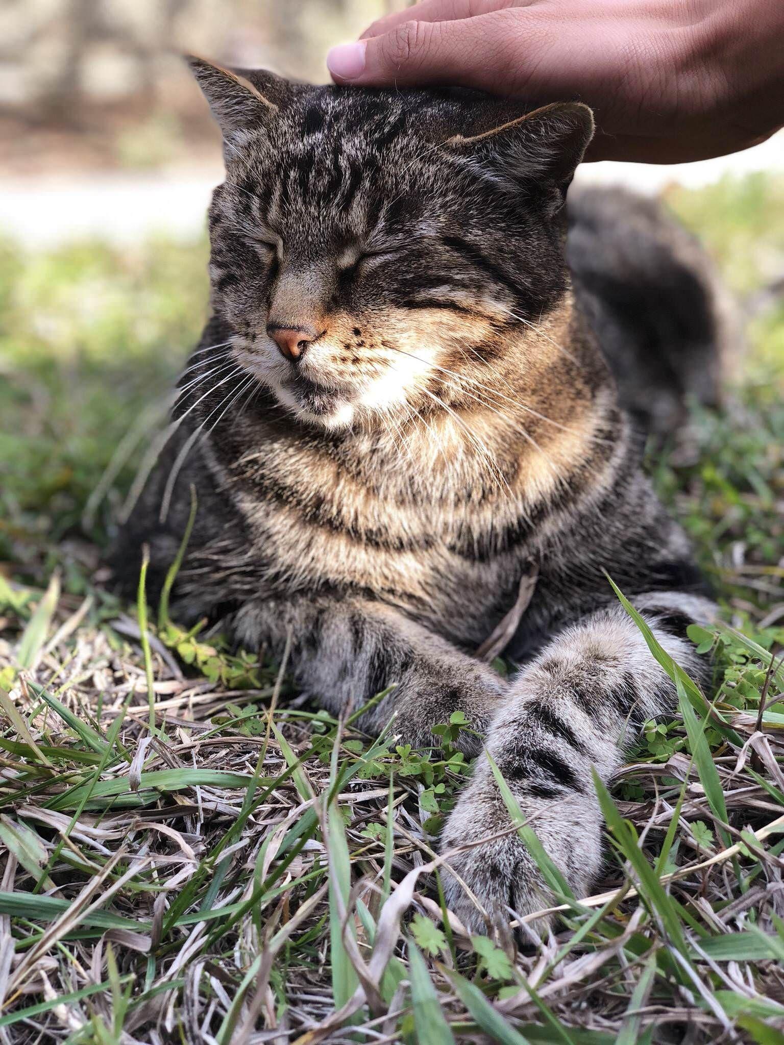 Neighborhood cat enjoying her head scratch http://ift.tt/2BSJw3U