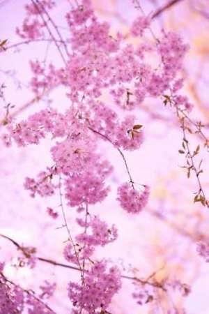 Cuadro Bright Blooms III