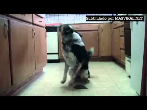 Éste podría ser el perro mejor entrenado del mundo.