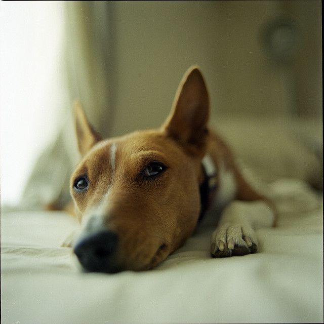 hm? ;) in 2020 Hunde, Welpen, Hundewelpen