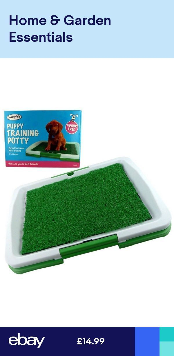 How To Litter Train A Dog Potty Training Puppy Dog Training