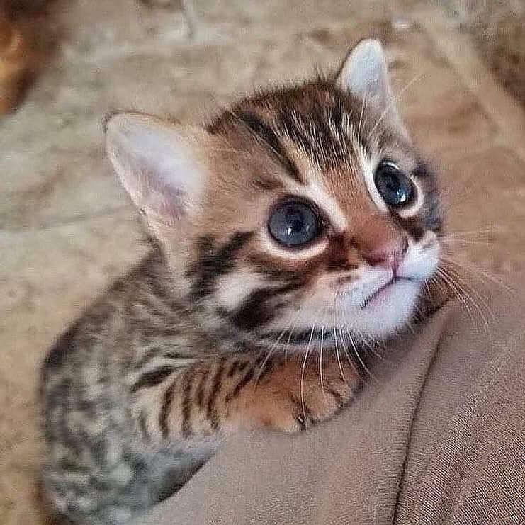 22 Adorable Baby Animals Here To Give You Instant Heart Eyes Kittens Cutest Cute Cats And Kittens Cute Baby Animals