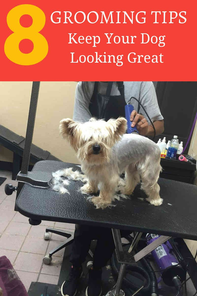 Dog Grooming Training For You Dog Care Tips Pinterest Dog
