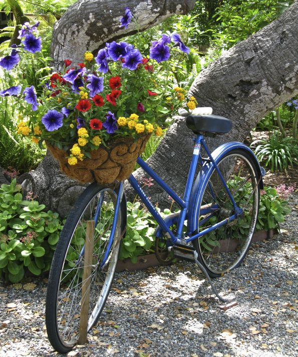 Blue bike in the garden. TG ~ Gorgeous display of multiple flowers~❥
