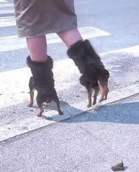 Dog Shoes Weird Pinterest Schuhe Lustig And Verruckte Mode
