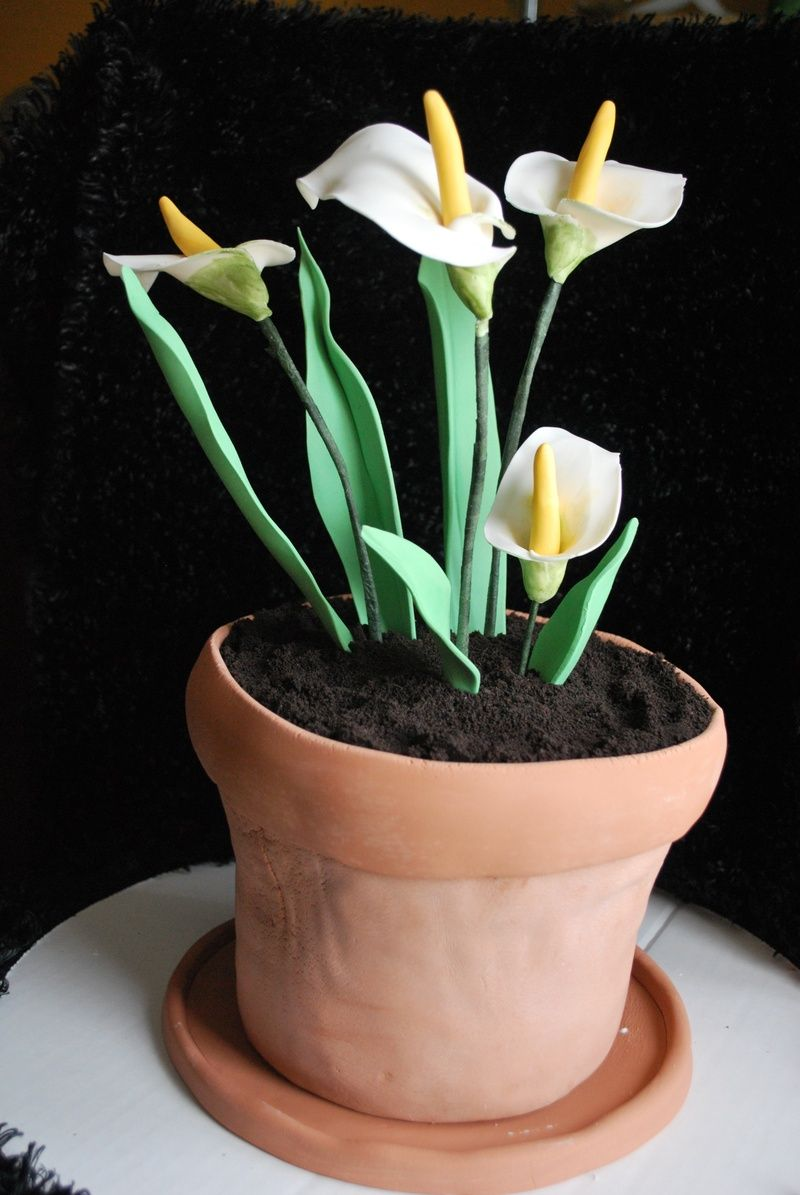 Flower Pot Cake With Calla Lilies By Nibblescakes Webs Com