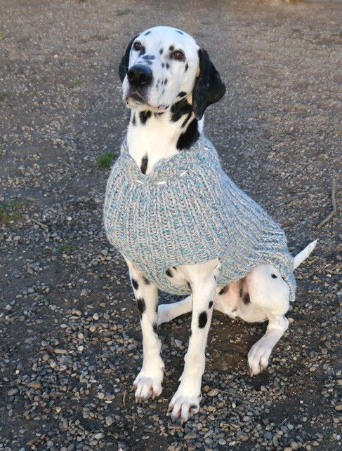 Hundepullover für Dalmatiner | Dalmatians | Pinterest | Dalmatiner ...