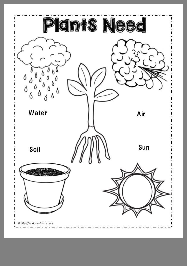 Plants Habitat Worksheets For Kindergarten