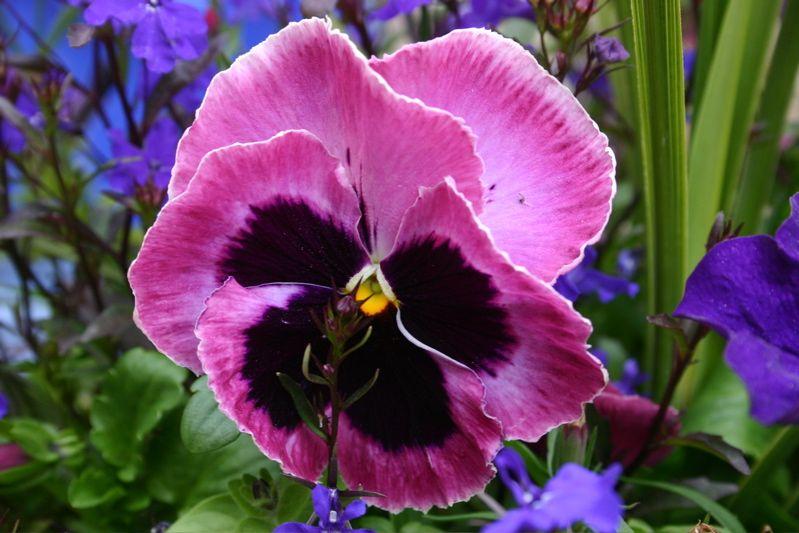 I Like It As Above So Below Always In The Country Http Samissomarspace Wordpress Com Purple Flowers Beautiful Flowers Fancy Flowers