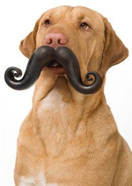 Moustachio Dog Fetch Toy Dog Mustache Cute Dog Tags Dog