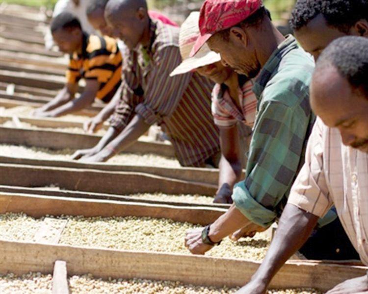 Ethiopia yirgacheffe coffee review fresh coffee coffee