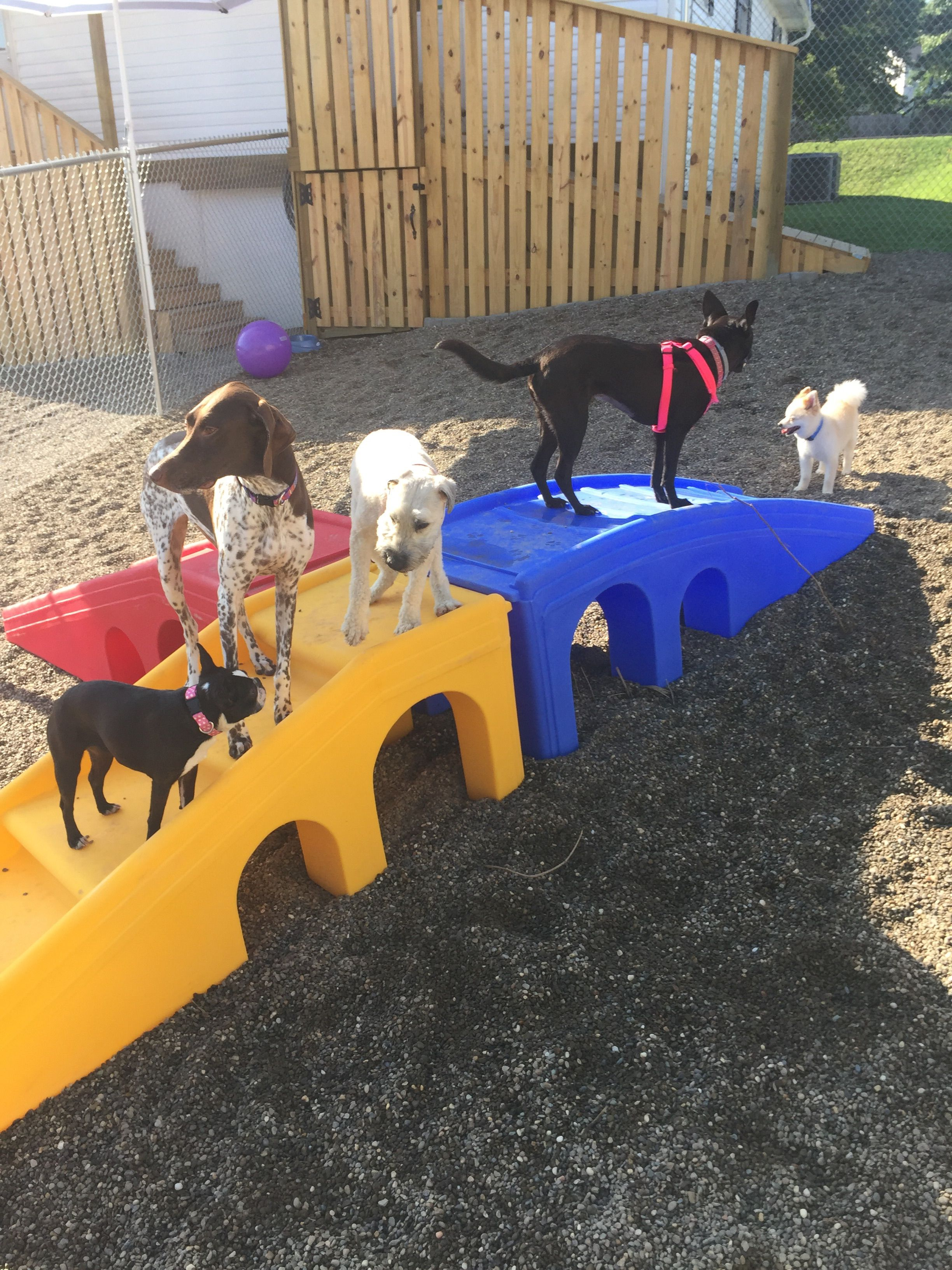 Some Benefits Of Daycare Service For Your Pets Include Socialization For Dogs Makes Your Pets Healthier Calmer And More Easily Cont Your Pet Daycare Pets