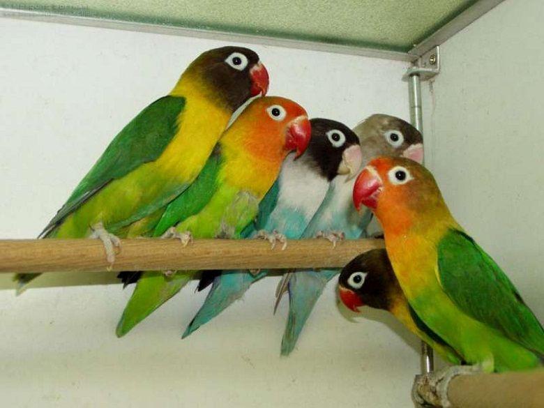 The Different Types Of Talking Pet Birds Bird Gifts Pet Birds Beautiful Birds