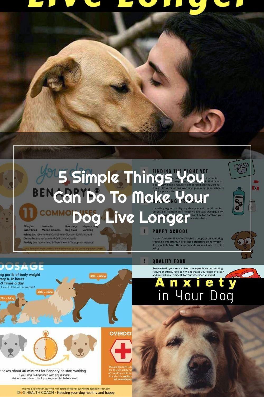 Pin Na Dog Care