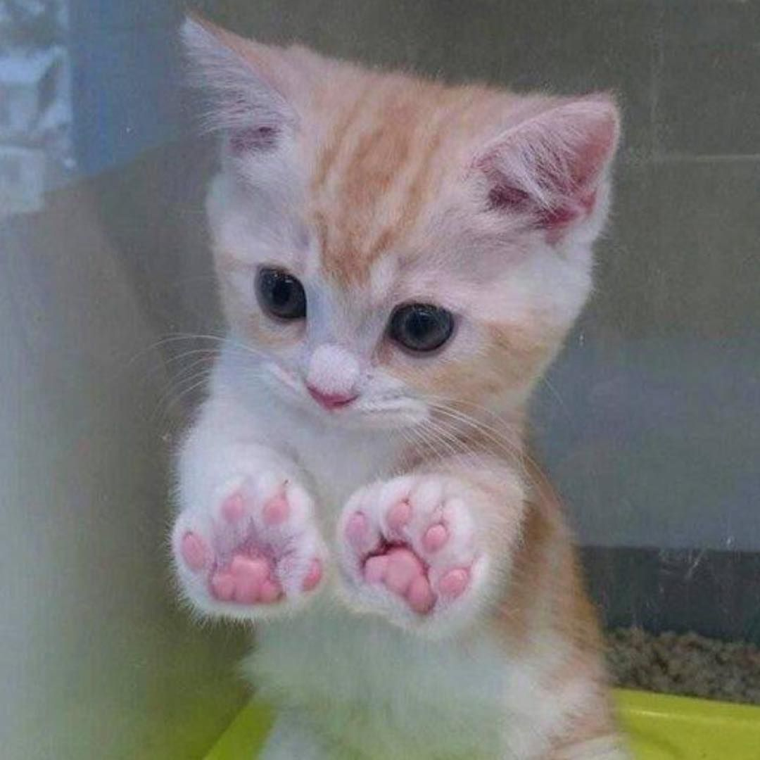 Hay I Just Pooped One Time On The Couch Cute Baby Animals Kittens Cutest Cute Animals