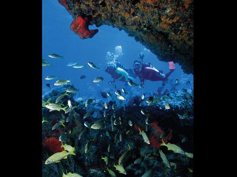 Underwater Adventures At Looe Key Little Palm Island Resort