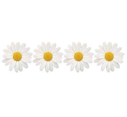 daisies tumblr transparent google search clip art. Black Bedroom Furniture Sets. Home Design Ideas