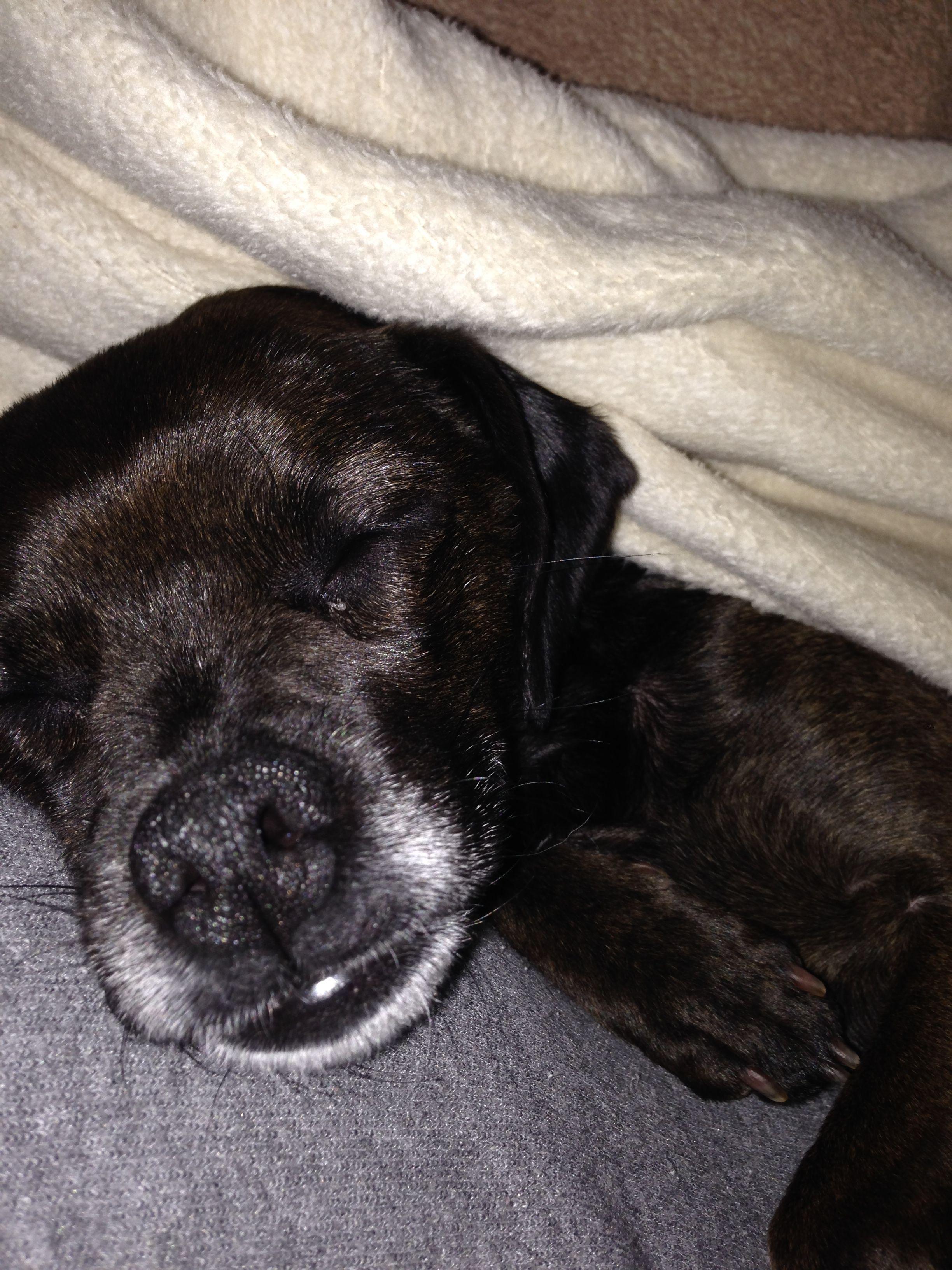 Puppy mill rescue ohio