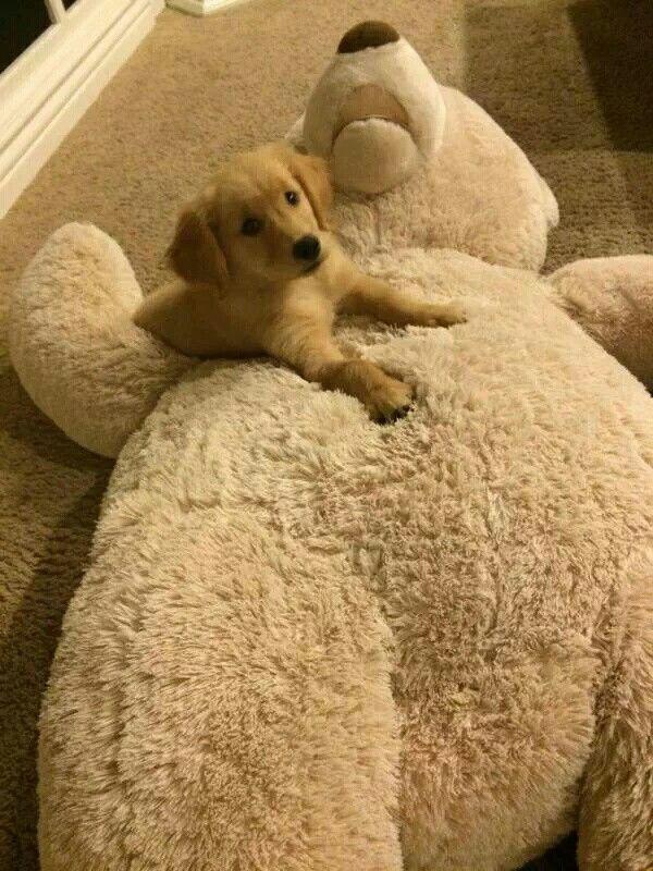 Big bear, little puppy >.<