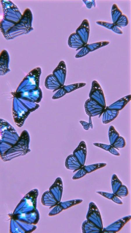 Blue Butterfly Butterfly Wallpaper Iphone Butterfly Wallpaper Purple Wallpaper Iphone Purple and blue aesthetic wallpaper