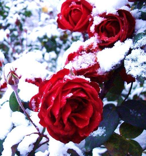 Randění a květiny