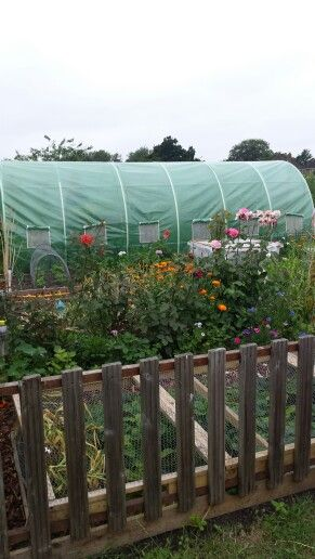 Front of allotment 2015