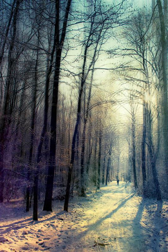 Forest photo by Dirk Wustenhagan