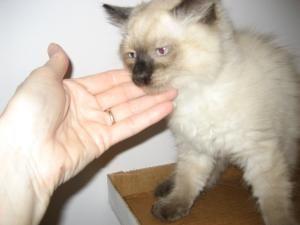 Adopt Valentino On Pet Finder