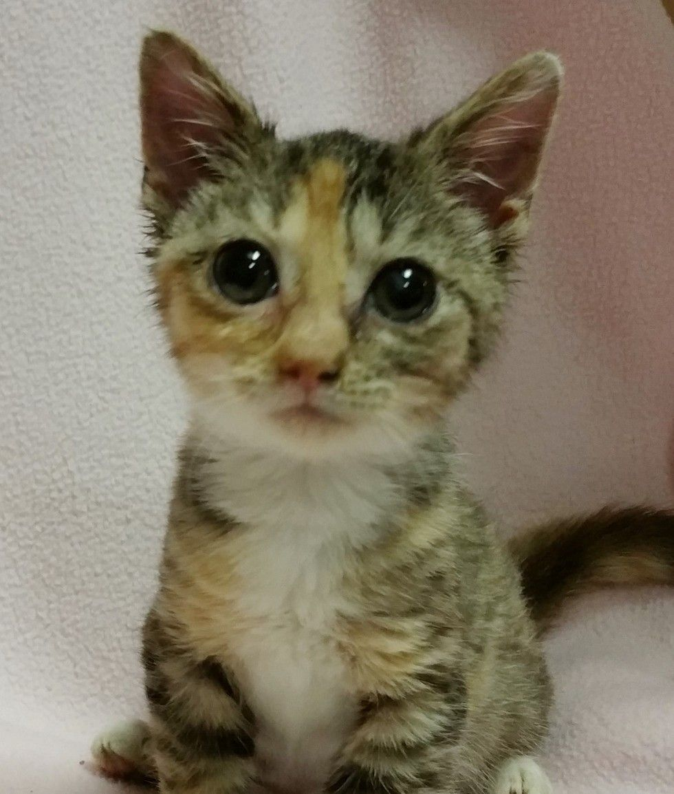 Micro Kitty Only 1 3 Of Normal Size Tries To Grow Big A Few Months Later Kitten Rescue Kittens Cutest Kitten