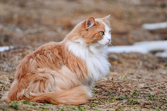 Relaxing And Fluffy Flickr Photo Sharing Fluffy Cat Cat Fur Cute Cat Wallpaper